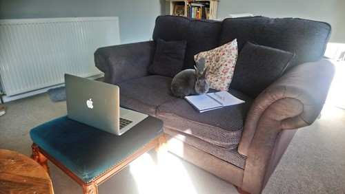 Home office with my assitant Stanley
